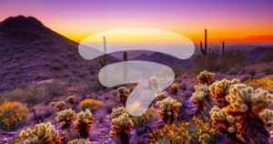 AZ-Tech-Beat-Amplify-Your-Social-Media-with-Ampsy-Expands-to-Scottsdale-feature